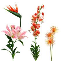 Eksoottiset kukat