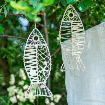 Merellinen kalakoriste pajunkoristeella ja simpukoilla, koristeellinen ripustuskala luonnon muodossa 38cm