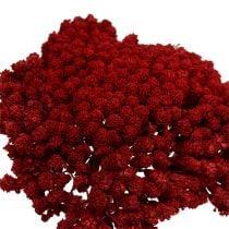 Achillea 1kg Viini punainen