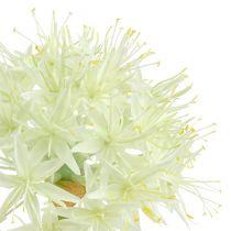 Allium kerma valkoinen L76cm