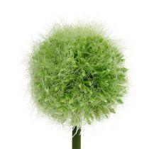 Allium vihreä L37.5cm 4kpl