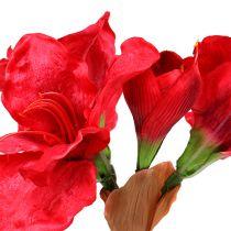 Amaryllis tummanpunainen 72,5 cm