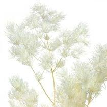 Parsa Dry Deco Valkoinen kuivattu koristeheinä 80g