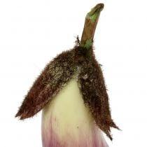 Munakoiso 18,5 cm violetti
