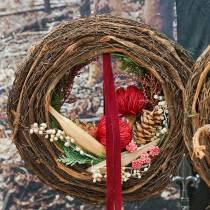 Banksia Baxterii punainen 8kpl
