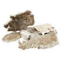 Puinen sieni pesty valkoisena 1kg