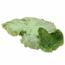 Puu sieni vihreä valkoinen pesty 1kg