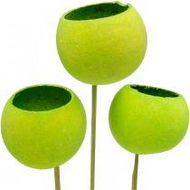 Bell Cup on a Stick Vihreä Kuivattu Exotics 15kpl