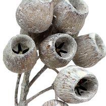 Bellgum oksa 5-7 valkoinen pesty 20kpl