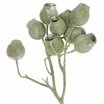 Bellgum oksa 5cm - 7cm vihreä himmeä 20kpl
