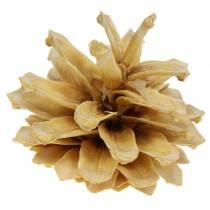 Pinus mugo kerma männynkäpyjä 2-5cm 1kg