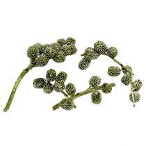 Casurina-kartiot vihreät, vahatut 110g