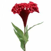 Celosia cristata kukkakimppu punainen 72cm