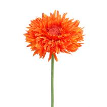 Krysanteemi Teddy 63cm Oranssi