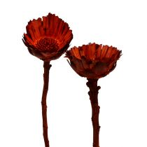 Compacta ruusukkeet oranssi (37) 40kpl