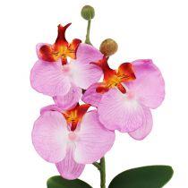 Koristeellinen orkidea vaaleanpunaisessa ruukussa H29cm
