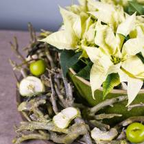Dekoast curry bush green pesty 500g