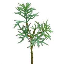 Echeveria 33cm vaaleanvihreä