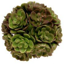 Echeveria pallo 5cm vihreä 4kpl