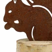Orava ruostumatonta terästä rungolla H22cm