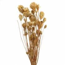 Kuivatut kukat fenkoli luonnon 100g