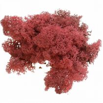 Koristesammal punainen bordeaux Islanninsammal koristeluun ja askarteluun 400g