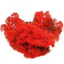 Koristesammal punainen Islanninsammal askarteluun 400g