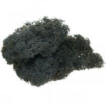 Deco moss musta säilötty islantilainen sammal askarteluun 400g