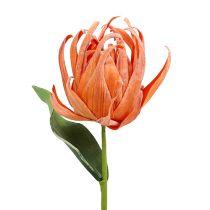 Vaahtokukka oranssi 12cm L30cm 1p