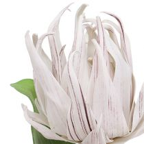 Vaahtokukka valkoinen, violetti 12cm L30cm 1p