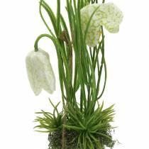 Fritilaria munankuoressa ripustaa keinotekoisesti vihreä, valkoinen 25cm