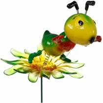 Puutarhatulppa Sirkka kukassa Värikäs 11cm