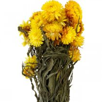 Olkikukka keltainen kuivattu kuivakukat Deco Nippu 75g