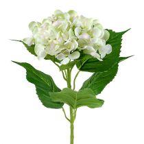 Hortensia valkoinen-vihreä 60cm
