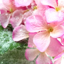 Hortensian vaaleanpunainen, lumivaikutuksella 25cm