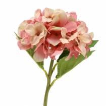 Hortensia Beige/ Vaaleanpunainen 35cm