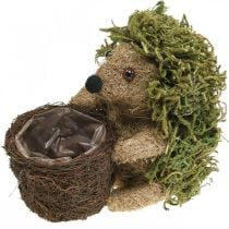 Siili korin kanssa vihreä, syksyn koristelu istutukseen, koristeellinen kasvikori H24cm Ø9,5cm