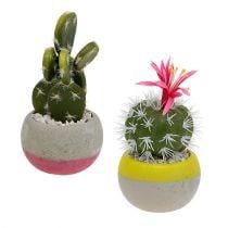 Kaktukset kattilassa H13cm 4kpl