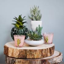 Kaktukset kattilassa Ø12cm 1kpl