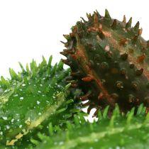 Viikuna päärynä 5cm vihreä-ruskea 6kpl