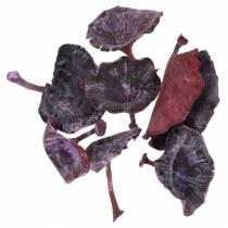 Kalix sieni violetti, valkoinen pesty 100kpl
