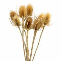 Kuivatut kukat ohdake luonto 8kpl
