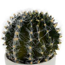 Kaktus ruukussa vihreä 14cm
