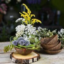 Kookos koristeellinen kulho luonto kiillotettu 6kpl