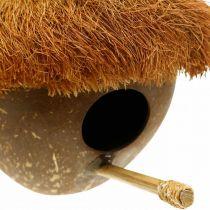 Kookospähkinä pesälaatikkona, linnunpönttö ripustettavaksi, kookospähkinä koriste Ø16cm L46cm