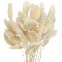Lagurus Kuivattu jäniksenhäntä ruoho valkaistu 40-50cm 50kpl 50kpl