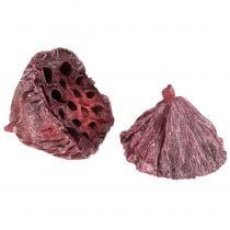 Lotus mix punainen, valkoinen pesty 25kpl