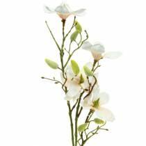 Magnolia persikka 85cm