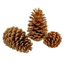 Maritima tötteröt kerma vanilja sekoitettu 5-18cm 25kpl 25kpl