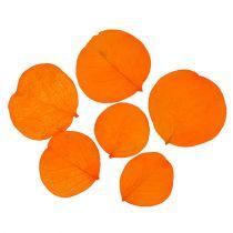 Moneta jättää aprikoosia 50 g